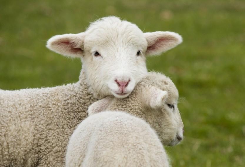 agnelli pasqua