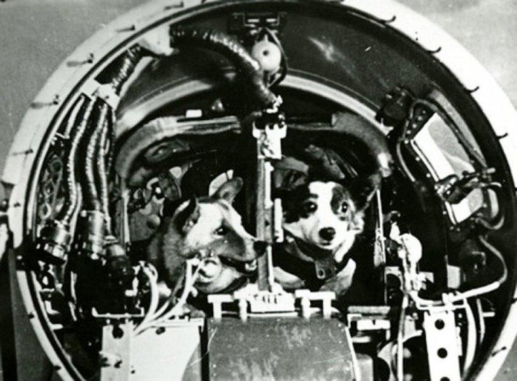 cani russi spazio