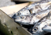 Turbulent tides for UK fishing, warns Yorkshire & Humber MEP