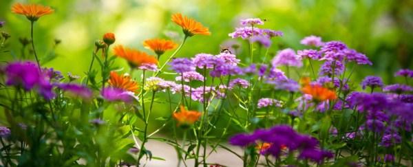 Dierenvoeding Heusden   Bloemen Maris