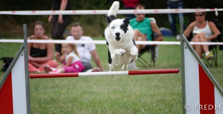 agility-dog-cormery-04