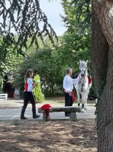 spectacle-equestre-abbatiale-09