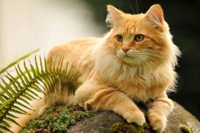 Резултат со слика за Golden Cats