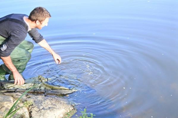 ce jour-là, quelques poissons ont répondu à un amorçage d'accoutumance
