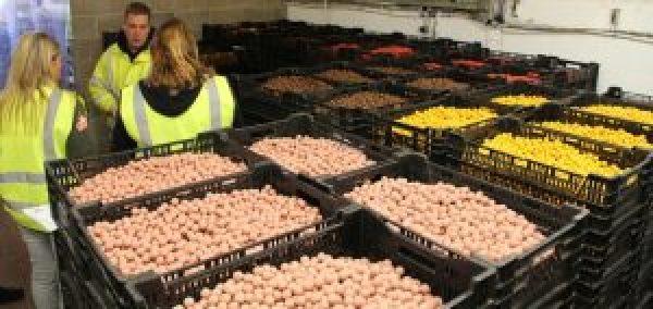 De nos jours, de grandes quantités de bouillettes sont fabriquées