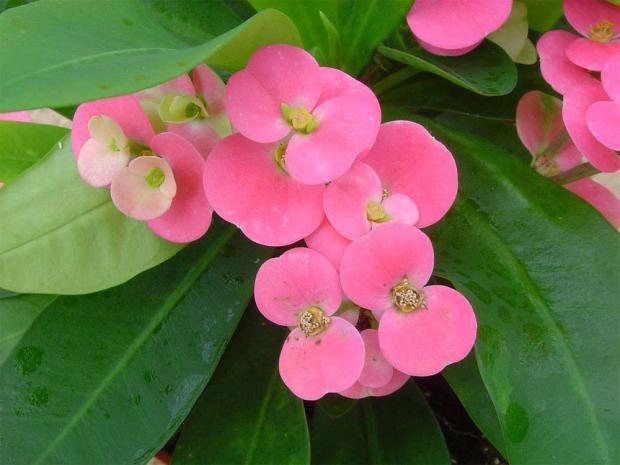 colchoes-de-noiva-flores