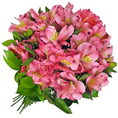 Astromélia é originária da América do Sul - Família Alstroemeriaceae