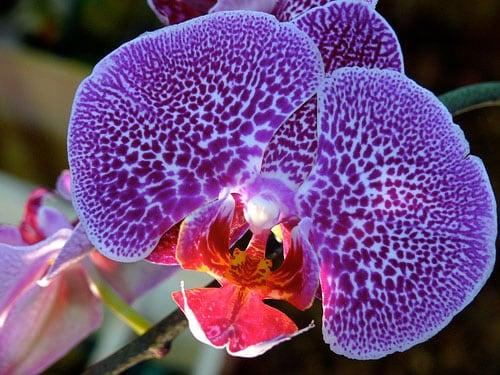 orquidea-foto-44