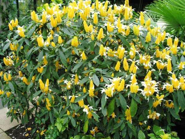 camarao-amarelo-flor-45