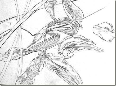 Les tapes pour faire un dessin de contour - Dessin contour ...