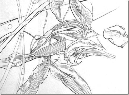 dessin de contour
