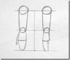 proportions avant bras