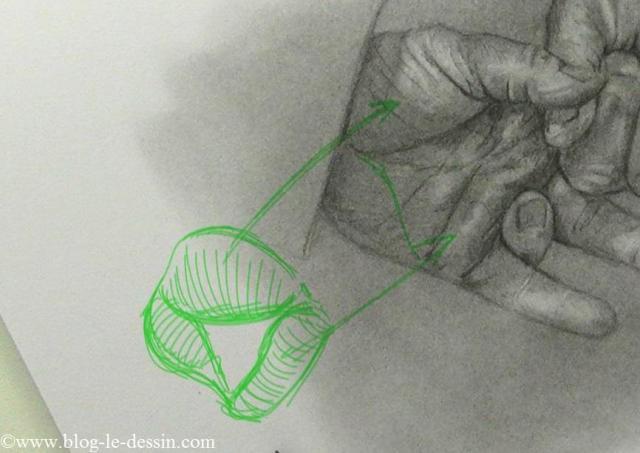 Un schéma des principaux muscles de la main.