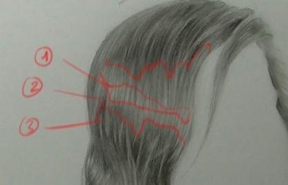 Une planche où vous voyez les zones importantes pour créer le modelé des cheveux.
