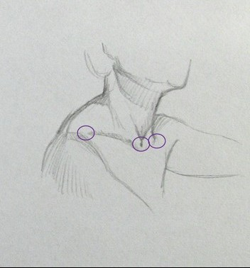 dessiner cou epaules raccourcis bras