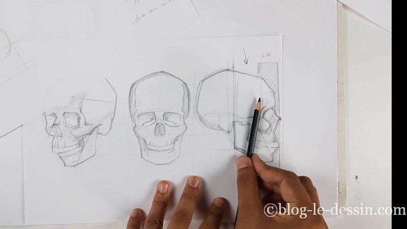 Dessiner le squelette du crâne et mesure au crayon