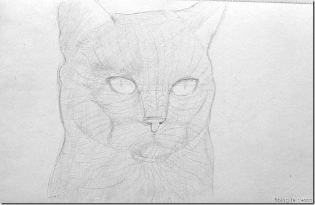 portraiturer un chat avec la méthode maori