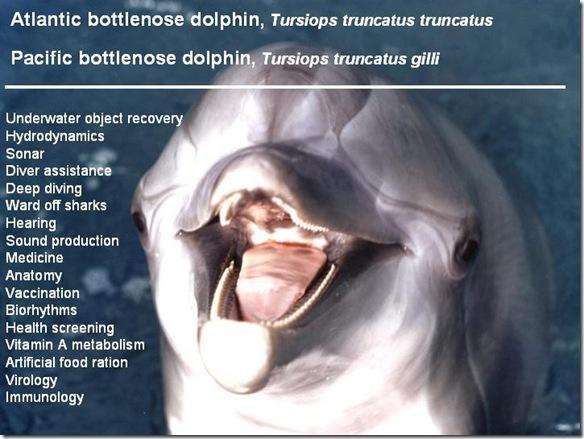 Navy Dolphins - Bio Bottlenose