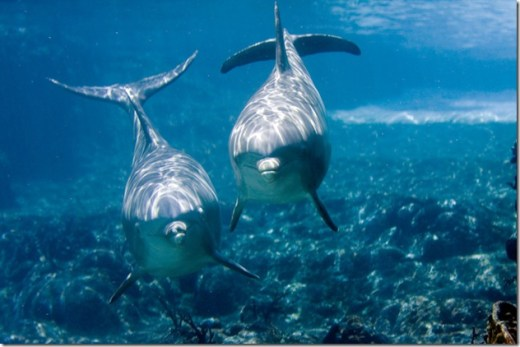 Pour les Grecs, les dauphins étaient des hommes transformés en poissons par Poséidon