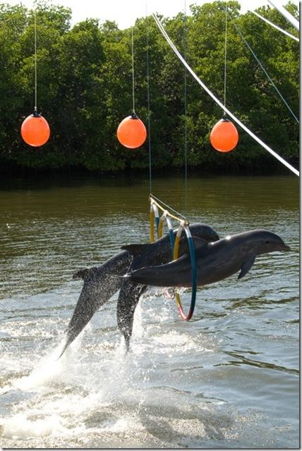 photoderek - Un delphinarium à Cuba, avec des dauphins effectuant un tour