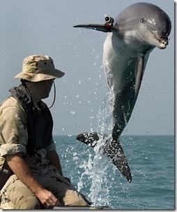 Un Navy Dolphin avec son dresseur durant l'invasion irakienne de 2003