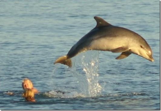 Moko, le dauphin solitaire - Photo flyingteachers.net