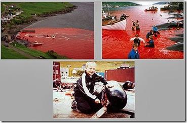 Marche silencieuse contre les massacres de dauphins aux îles Féroé le 12 juin 2010 à Hyères (83)