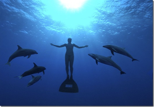 Agissons pour faire cesser le massacre des dauphins des Japon !