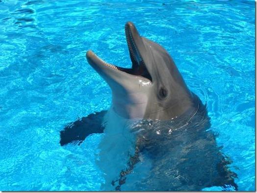 les dauphins n'ont pas leur place dans les flaques d'eau des delphinariums !