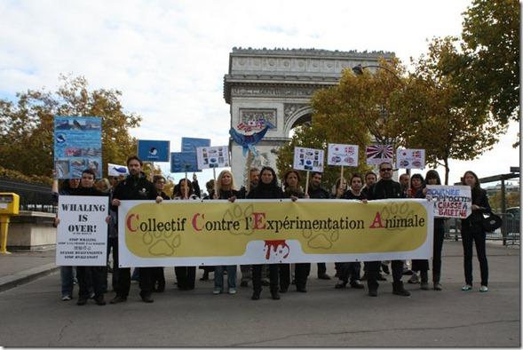 Journée Mondiale contre la Chasse aux Cétacés, 5 novembre à Paris