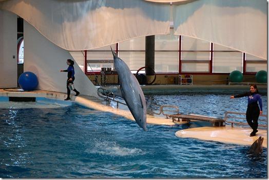 Le delphinarium de l'aquarium de Baltimore - Photo de Massmatt