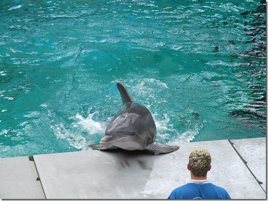 Le delphinarium du zoo de Duisburg - Photo de Gérard Van Drunen