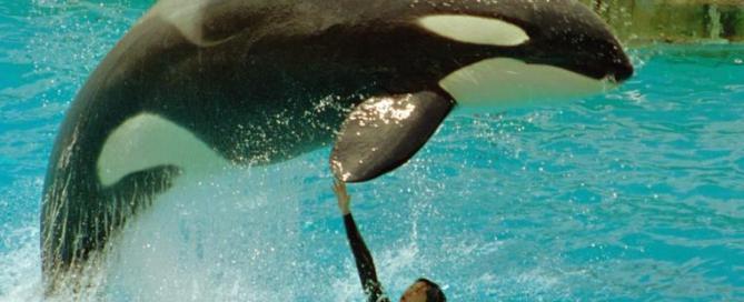 Orques captives - Le récapitulatif de l'année 2010