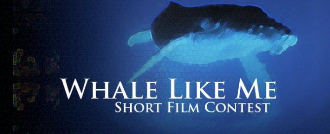 Whale Like Me, un concours de courts-métrages pour raconter les cétacés