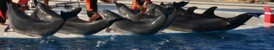 Quatre dauphins dans un delphinarium