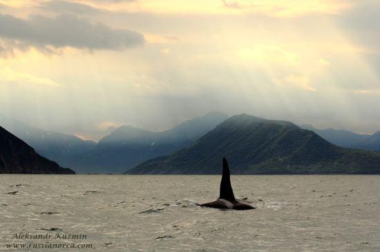 orque-russe-avacha-gulf