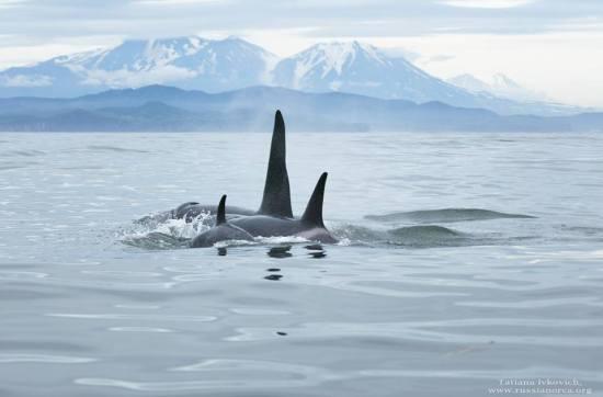 orques-russes-vers-la-chine