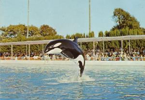 Kim Orca at Marineland