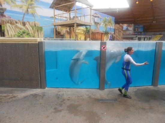 Bruges 2014 : courir avec les dauphins