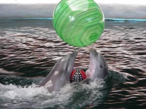 bulgarie-dauphins-varna-show2