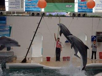 bulgarie-dauphins-varna-show4