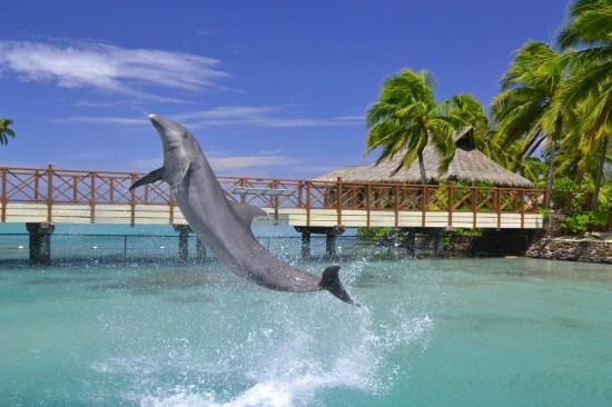 Moorea Dolphin Center, France