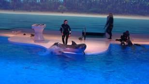 suede-dauphins1