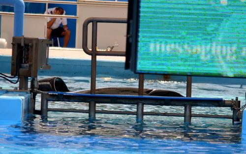 Orque dans une piscine