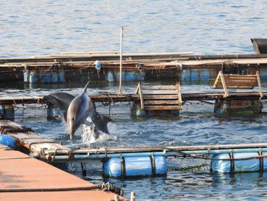 Les dauphins apprennent rapidement : des tours = nourriture