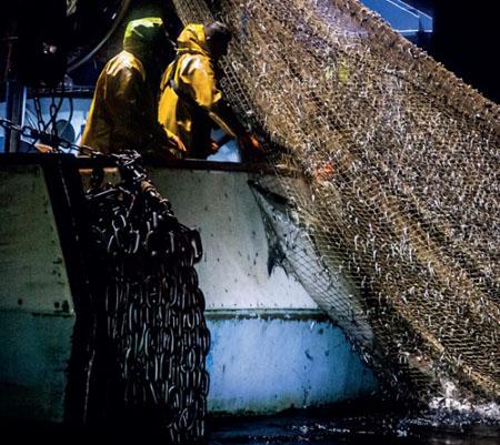 Dauphin pris dans un filet de pêche - Photo Sea Shepherd France