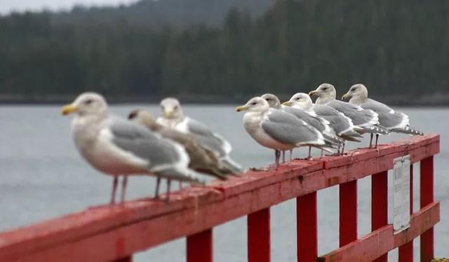 欄干にならんだ数羽の鳥さんたちの画像