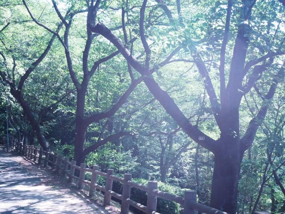 防府市桑山の散歩コースで撮影した木々と歩道の写真