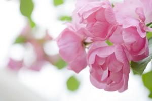 福岡 フォトスタジオ デジカメ講座 フォトスクール 写真教室 写真の撮り方 ストックフォト 0358