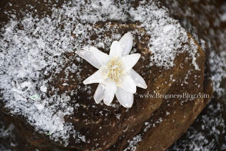 DIY Edelweiss mountain flower made from hot glue.